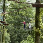 The Castlecomer Discovery Park Tree Top Adventure. Picture: Alf Harvey.