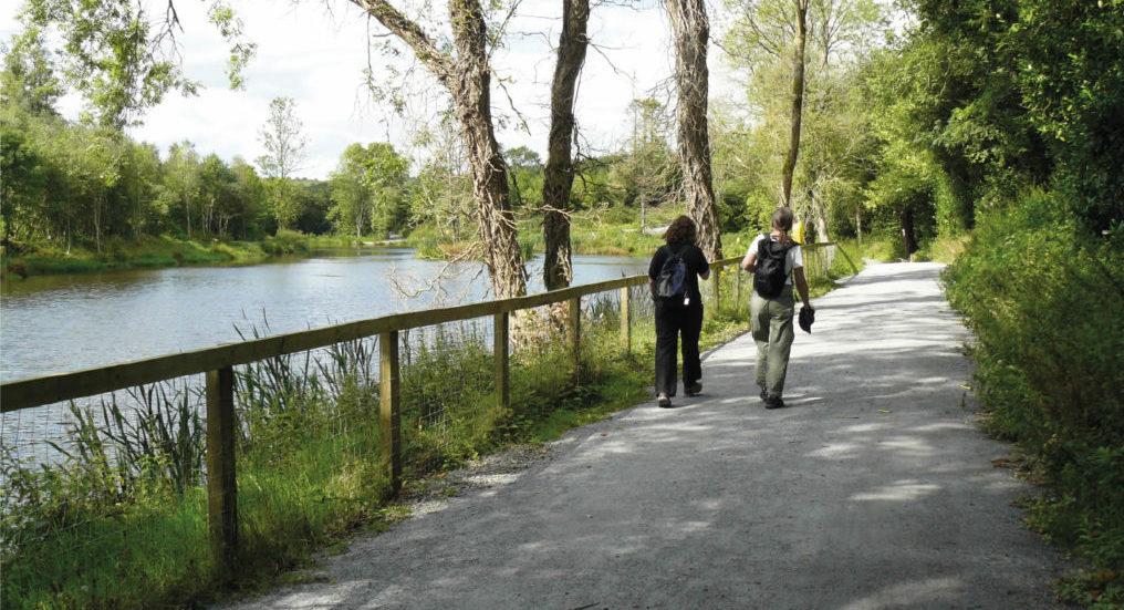 Castlecomer Loop Walk