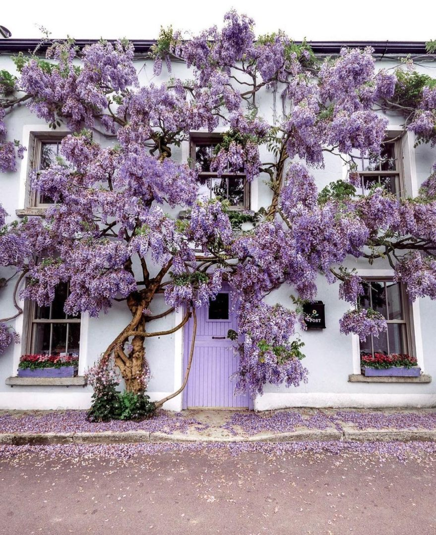 Inistioge House Savoygardens